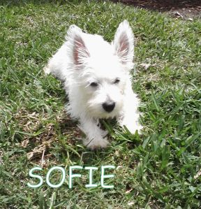 Sofie PF pic