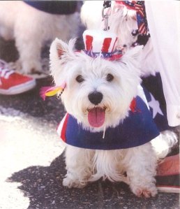 Westie 4th of July