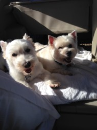 BB & Rosie Car Ride