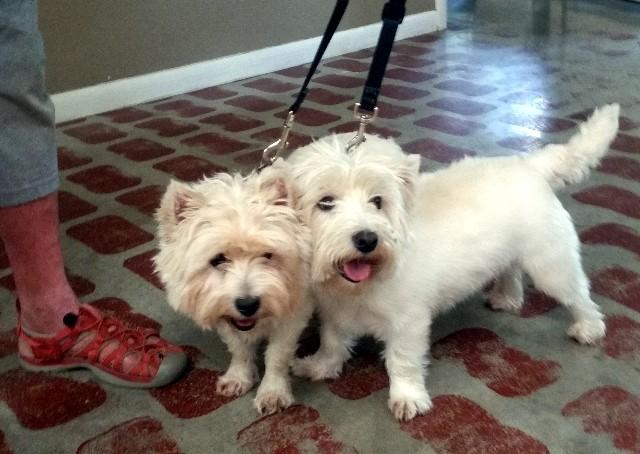Billy Bob & Rosie 1