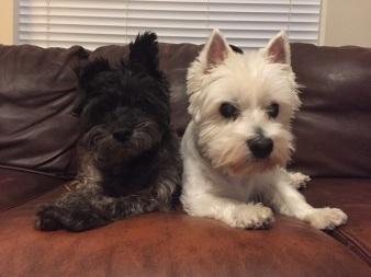 Annie & Sydney