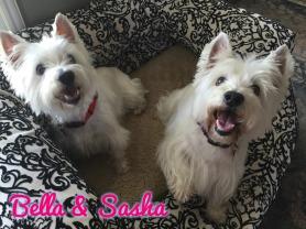 Bella  Sasha 1a
